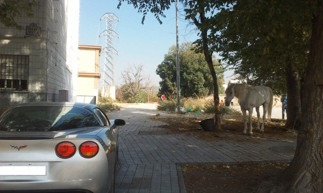 un caballo aparcado junto a un corvette en Rey Badis y Molino Nuevo