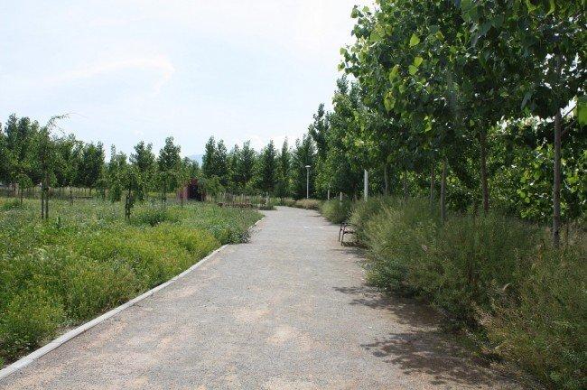 El psoe critica la sustituci n de rboles en el parque de for Piscina municipal la chana granada