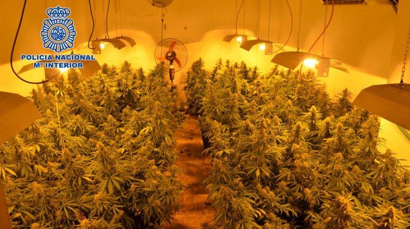 invernadero indoor marihuana trasteros molino nuevo granada zona norte
