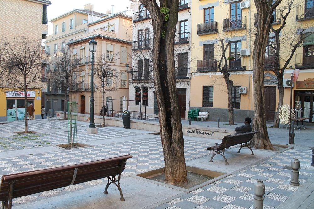 Árbol enfermo en la Plaza Carlos Cano.
