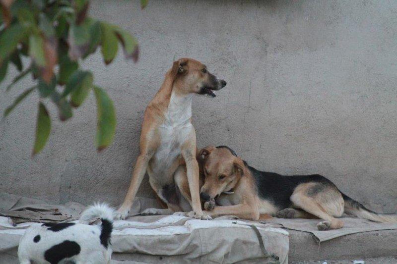 Vito, con su amigo Brooklin. Foto: Solidarios con los Animales.