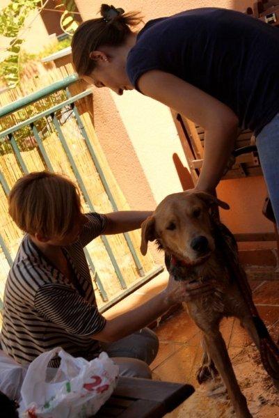 El primer baño de Vito. Foto: Solidarios con los Animales