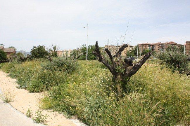 Parque de olivos de la Chana
