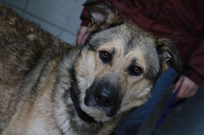 Urko, en la residencia canina, 'Solidarios con los animales', Realejo