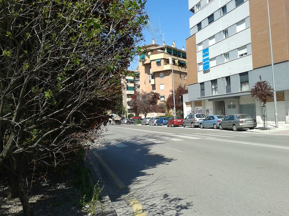 Vegetación dificulta la visibilidad en la Chana, Granada