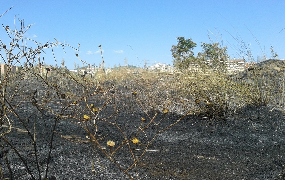 Incendio de matorral en la Chana