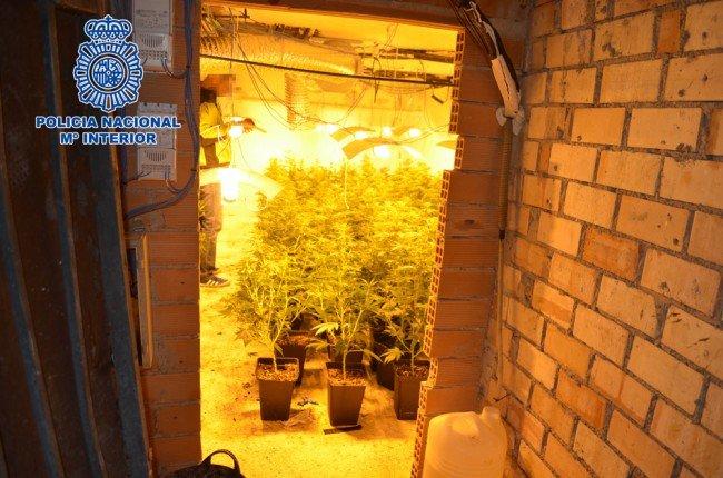 invernadero indoor trasteros molino nuevo granada zona norte