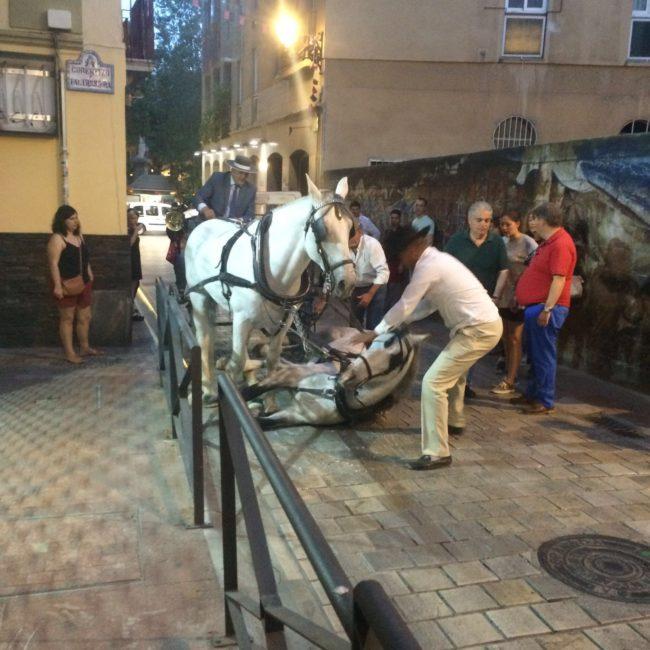 caballo caído en San Matías